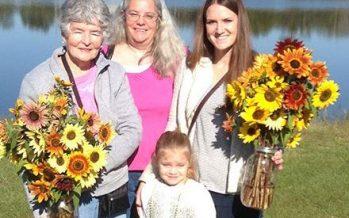 Stanley Pond Adventure Farm Sunflower Festival