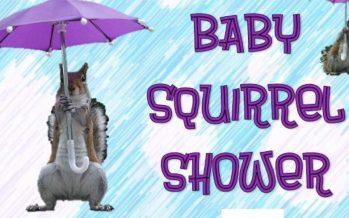 Baby Squirrel Shower 2017