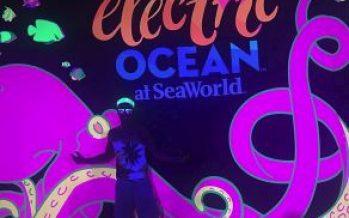 SeaWorld Brings Summer Nights to Life