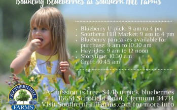 Southern Hill Farms Blueberry Patch
