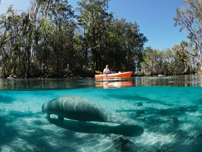Florida Springs Guide