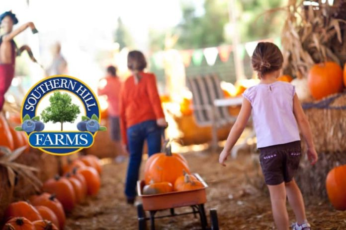 Southern Hill Farms Fall Festival