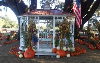 Painted Oaks Pumpkin Patch