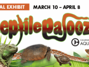 Reptilepalooza 2018