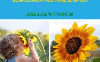 Sunflower Festival & Upick