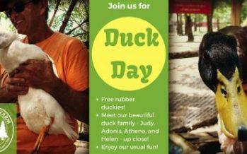 Duck Day at Santa's Farm