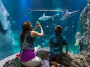 Sea Life Orlando Aquarium Shark Month 2018