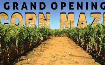 Jacks Corn Maze 2018