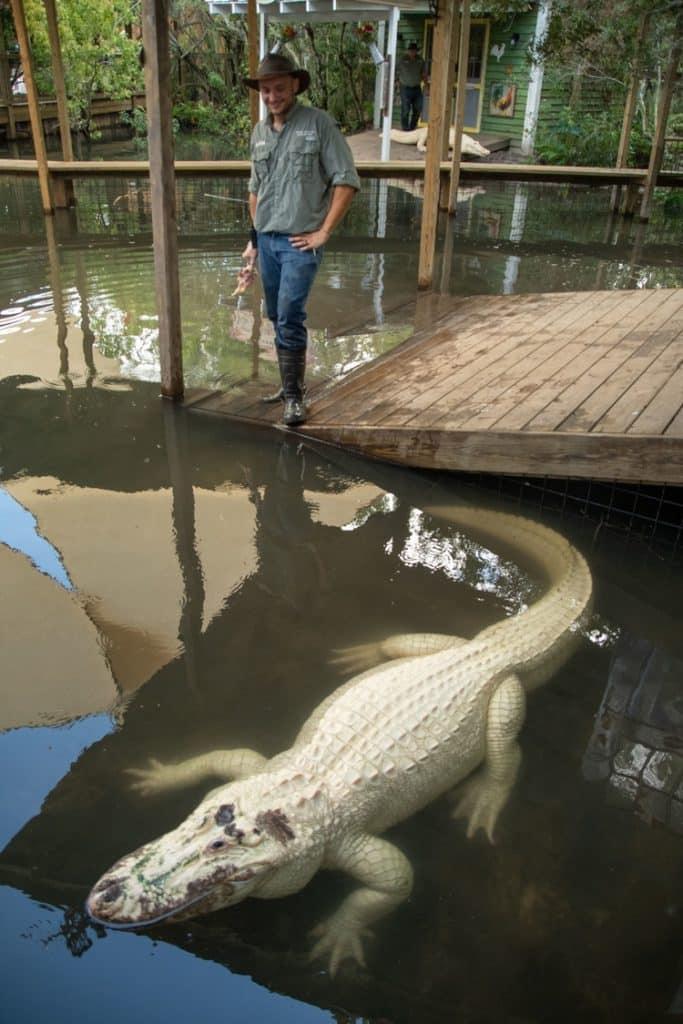 Gatorland Opens Breeding Facility for White Gators